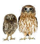 Female Owl And Owlet