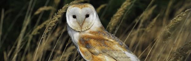Owl Habitat