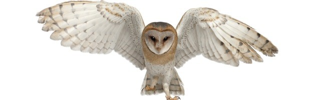 barn owl essays Barn owl research papers - compose a timed custom research paper with our assistance and make your teachers shocked no fs with our top essay services learn everything you need to know about custom writing.