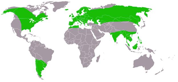 Distribución geográfica de los búhos