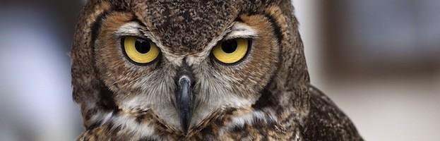 Owls Conservation Efforts