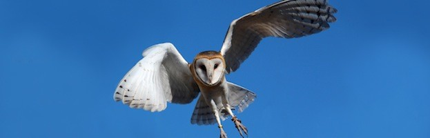 Owl Conservation